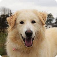 Adopt A Pet :: Moe - Bedminster, NJ