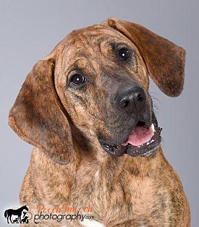 Hound (Unknown Type)/Plott Hound Mix Dog for adoption in Effort, Pennsylvania - Wendy