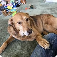 Adopt A Pet :: Lex *Courtesy Listing - Los Angeles, CA