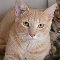 Adopt A Pet :: Louie - Johnson City, TN