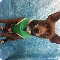 Adopt A Pet :: Blake - Lake Elsinore, CA