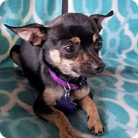 Adopt A Pet :: Tobin - San Antonio, TX