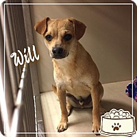 Adopt A Pet :: Will - Snyder, TX