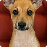 Adopt A Pet :: Granity - Miami, FL