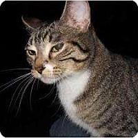 Adopt A Pet :: Deliha - Milwaukee, WI