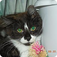 Adopt A Pet :: Suzi-Q - CARVER, MA