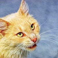 Adopt A Pet :: Doc McFluffins - Martinsville, IN