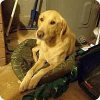 Adopt A Pet :: Goldie - Huntsville, AL