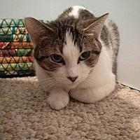 Adopt A Pet :: Corinna - Rochester, MN