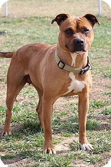 Pit Bull Terrier Mix Dog for adoption in Waldorf, Maryland - Kay