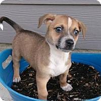 Adopt A Pet :: RUFF - Bryan, TX