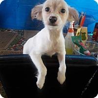 Adopt A Pet :: Lexie - LAKEWOOD, CA