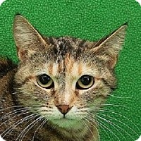 Adopt A Pet :: Martini    URGENT - St. Charles, MO