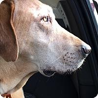 Adopt A Pet :: Charlie - Cedar, MN