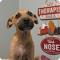 Adopt A Pet :: Kirby Benner - Groton, MA
