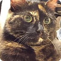 Adopt A Pet :: Shelly - Central Falls, RI