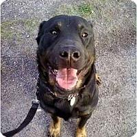 Adopt A Pet :: George - Moore, SC