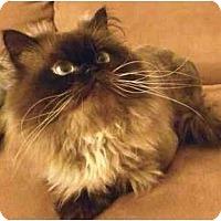 Adopt A Pet :: Guillermo - Beverly Hills, CA