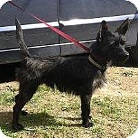 Adopt A Pet :: Perry - Seattle, WA