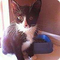 Adopt A Pet :: RITZ - Phoenix, AZ