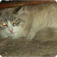 Adopt A Pet :: Sasha - Washington Terrace, UT