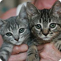 Adopt A Pet :: Karenia - Canoga Park, CA