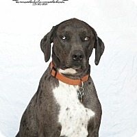 Adopt A Pet :: Jasper R Hall - Sweetwater, TN