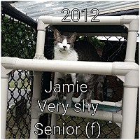 Domestic Shorthair Cat for adoption in Smithtown, New York - JAMIE