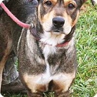 Adopt A Pet :: Cookie - Mt. Prospect, IL