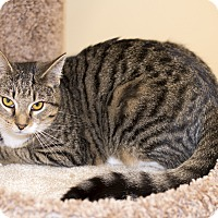 Adopt A Pet :: A..  Orphelia - Mooresville, NC