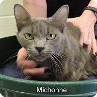 Adopt A Pet :: Michonne - Slidell, LA