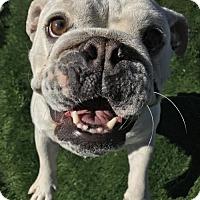 Adopt A Pet :: Sugar - Raytown, MO