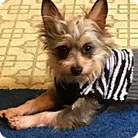 Adopt A Pet :: Sushi - Fincastle, VA