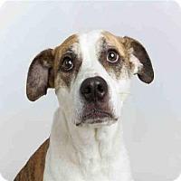 Adopt A Pet :: BILLIE GRACE - Murray, UT