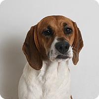 Adopt A Pet :: Penny - Redding, CA
