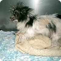 Adopt A Pet :: Possum - Washington, NC