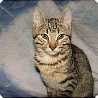 Adopt A Pet :: Freddie - Norwich, NY