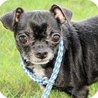 Adopt A Pet :: ORVILLE - AUSTIN, TX