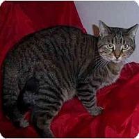 Adopt A Pet :: Willow - Lake Charles, LA