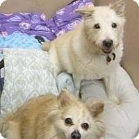Adopt A Pet :: Smarty Jones & Duke - Clementon, NJ
