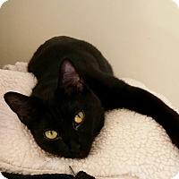 Adopt A Pet :: Ellie (3 legs) - Chattanooga, TN