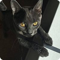 Adopt A Pet :: Zelda - Horsham, PA