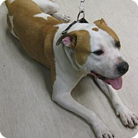 Adopt A Pet :: Bryan - Gary, IN