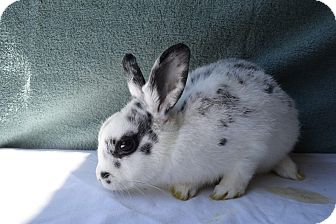 Other/Unknown Mix for adoption in Fountain Valley, California - Lucy
