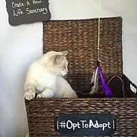 Adopt A Pet :: Charlie Nelson - Mosheim, TN