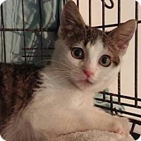 Adopt A Pet :: Donna - New Smyrna Beach, FL