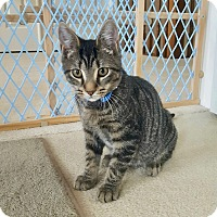Adopt A Pet :: Jack -Adoption Pending! - Colmar, PA