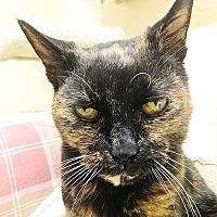 Adopt A Pet :: July - Port Angeles, WA