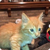 Adopt A Pet :: Cora - Daleville, AL