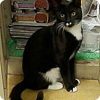 Adopt A Pet :: Stache - Hallandale, FL